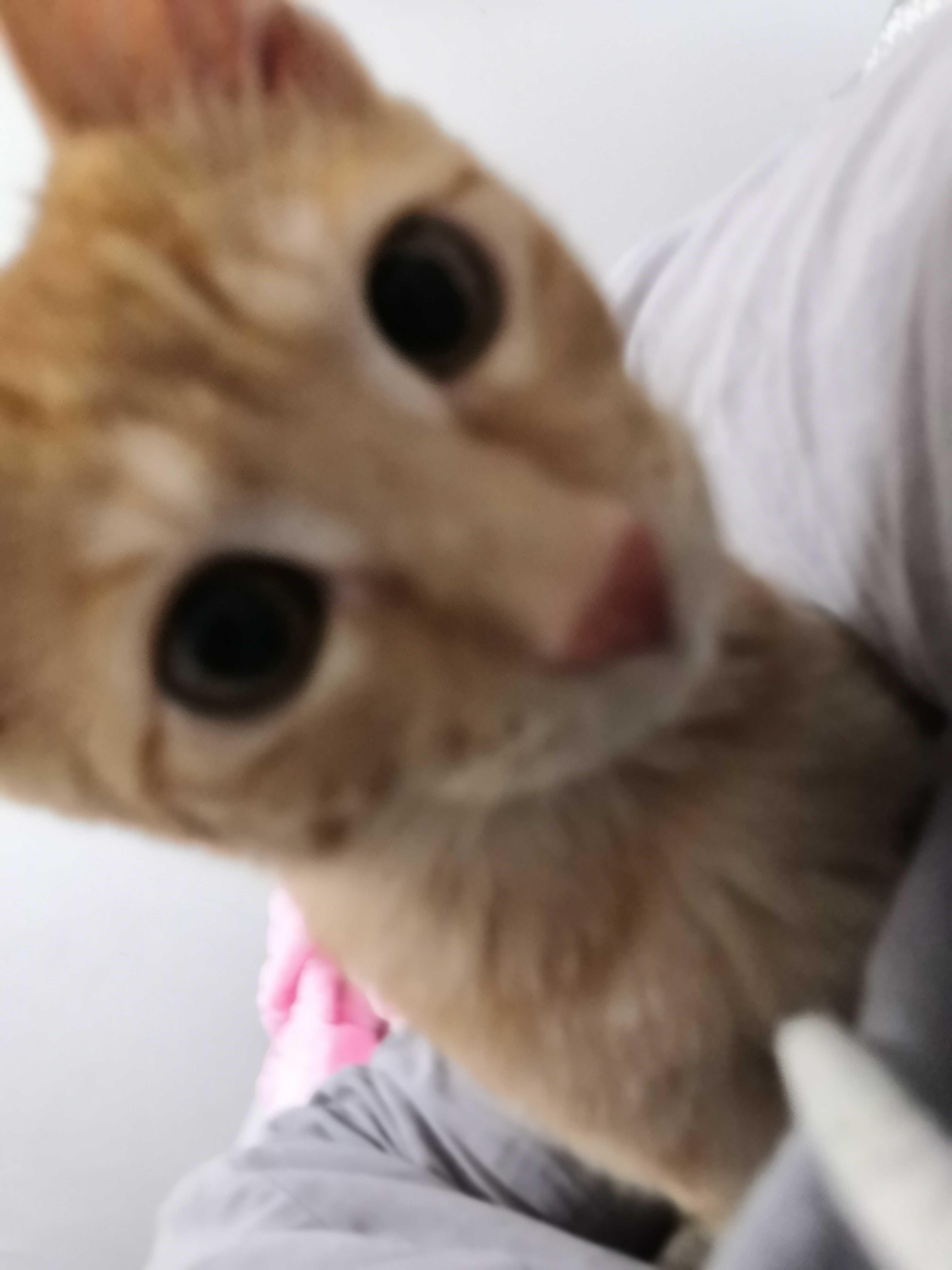 从前有只橙色调皮可爱叫虾条的小猫咪